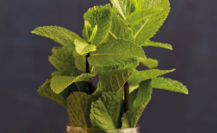 mint-room-fragrancing-scent-company